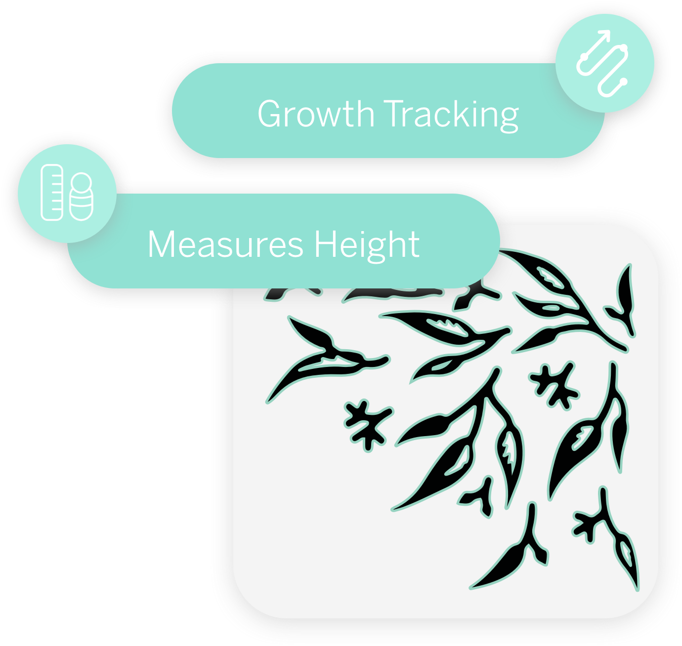 Growth Tracking, Measure Height